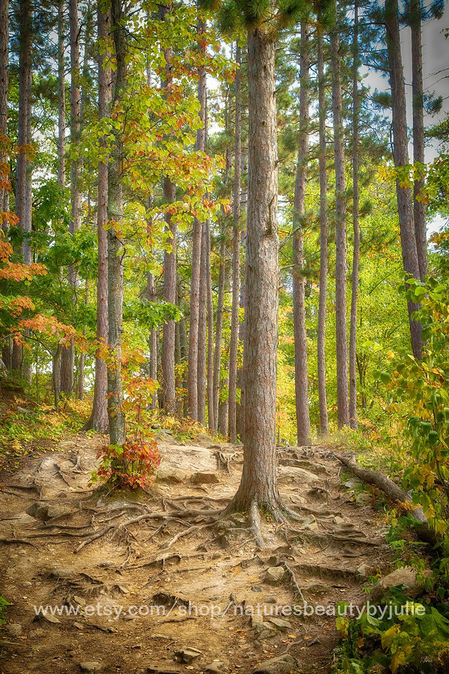Forest Photography Print, Fall Trees Wall Art, Michigan Photography ...