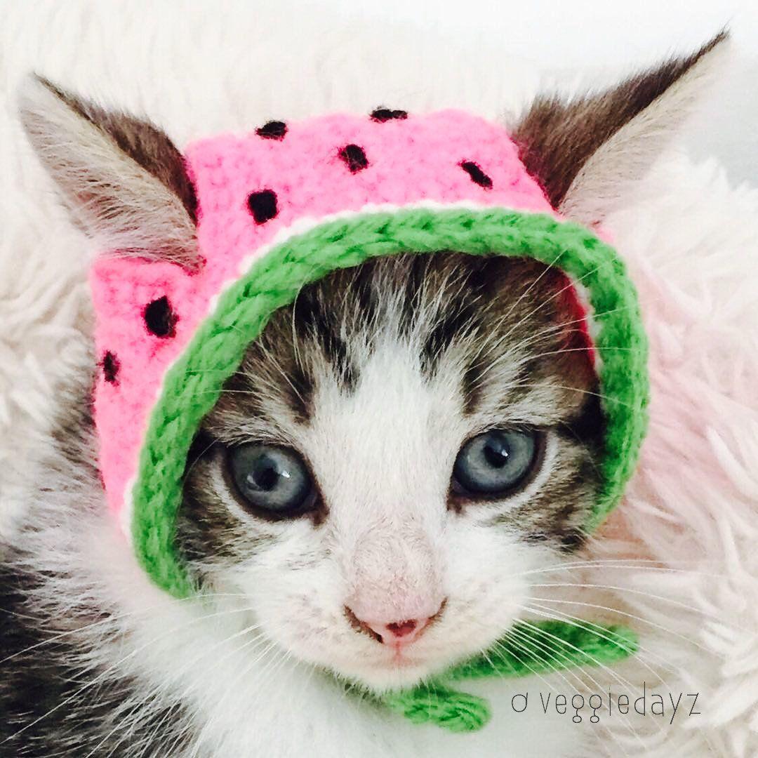 Crochet Hat For Cats Watermelon Etsy In 2020 Crochet Cat Hat Watermelon Cat Cat Sweaters