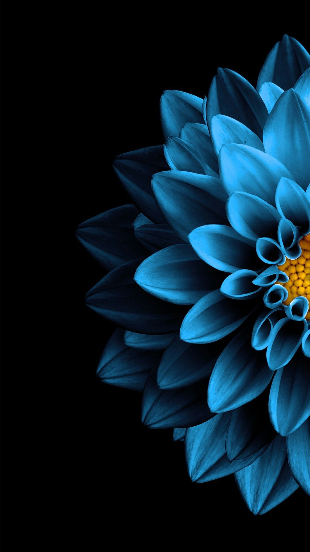 Bright Blue Dahlia Black Background Wallpaper In 2020 Flower Background Iphone Black Background Wallpaper Blue Wallpaper Iphone