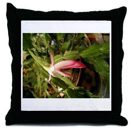 """This is a picture from my video titled """" Christmas Cactus In March"""" that can be viewed at youtube.com/viewwithme and can now be bought on your favorite items at Cafe Press titled """"Christmas Cactus"""" designed by: Doris Anne Beaulieu"""