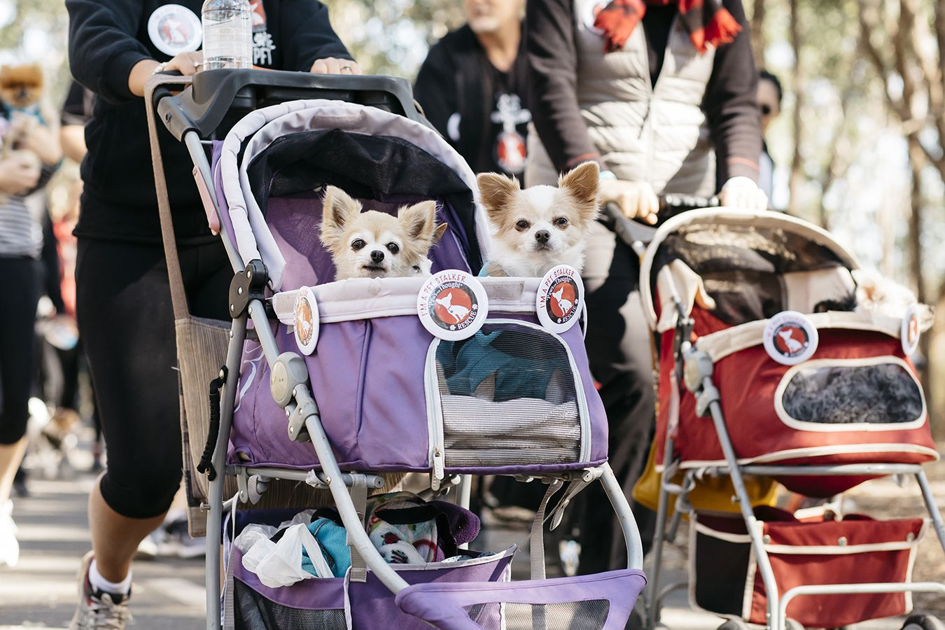 Rspca Million Paws Walk 2019 May 19 Australian Dog Lover Fight Animal Cruelty Dogs Day Out Australia Animals