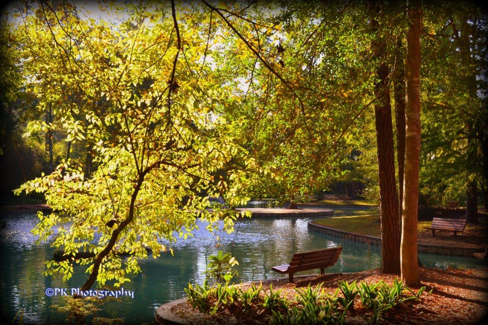 Mercer Arboretum and Botanic Gardens Houston Pinterest