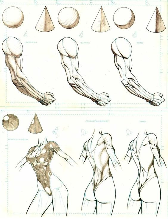 Character Design Collection: Arms Anatomy - Daily Art, references ...