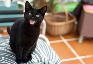 Top 5 Why Is My Cat Google Searches Of 2017 Find This Fantastic Photo From Katzenworld Blackcats Black Cat Appreciation Day Cats Meow Black Cat Day