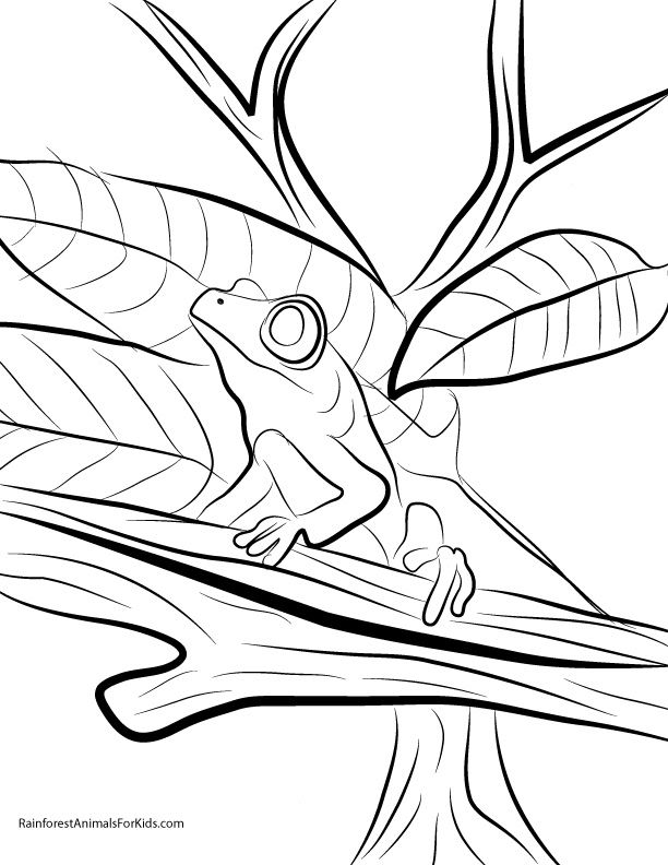 printable coloring pages of rainforest animals rainforest - Pictures Of Rainforest Animals To Color