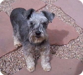 Littleton Co Sealyham Terrier Meet Mopey A Dog For Adoption Http Www Adoptapet Com Pet 8633103 Littleton Dog Adoption Sealyham Terrier Kitten Adoption