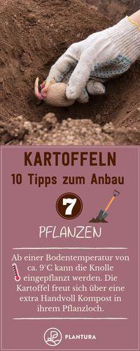 Photo of 10 consejos para cultivar papas en tu propio jardín – Plantura