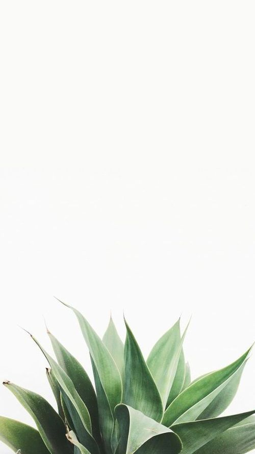 Iphone Wallpaper Green Plants And White Image Laptop Leaves