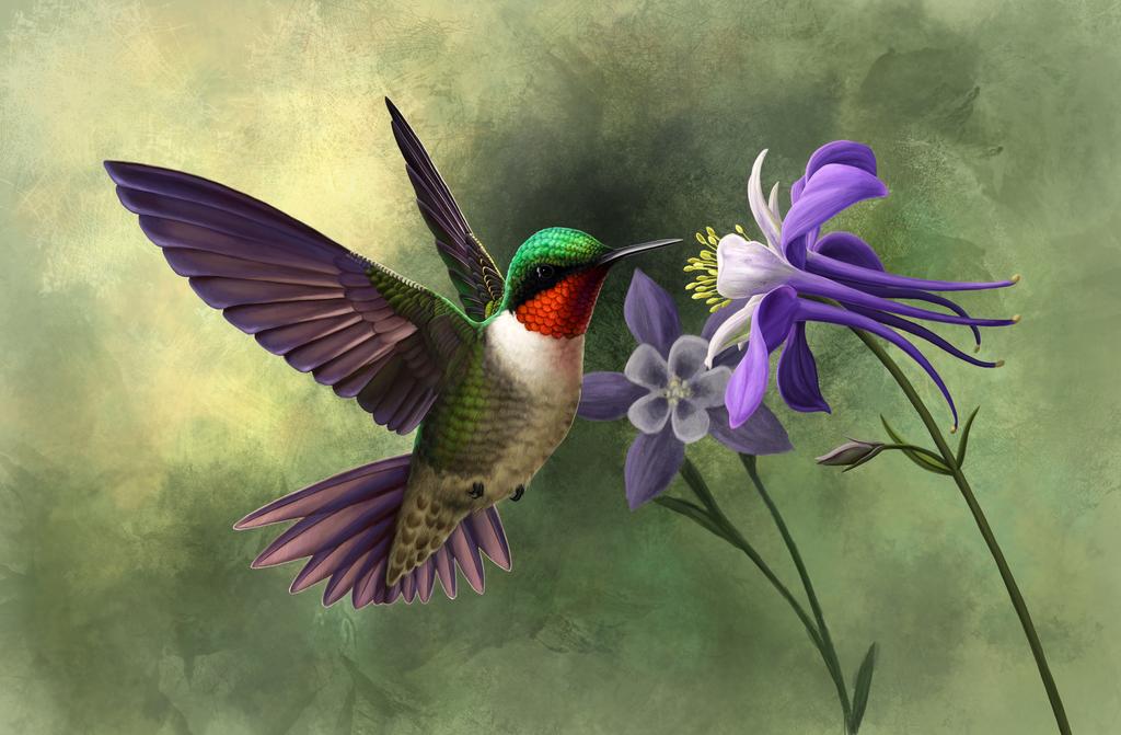 Ruby-throated Hummingbird by Nachiii on DeviantArt