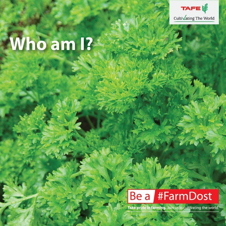 FarmDost presents FunCorner Identify this plant. These