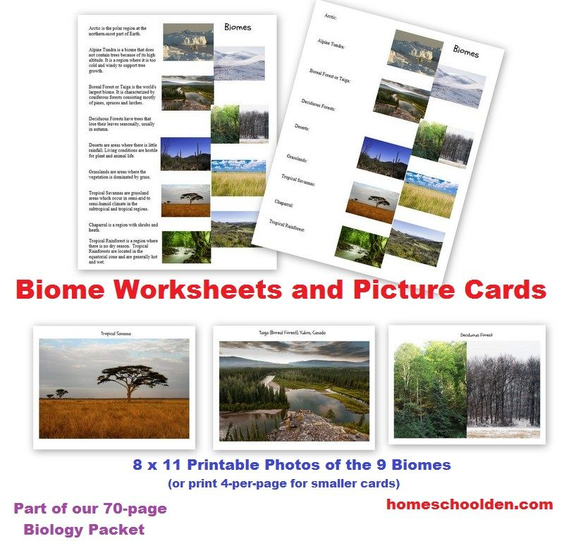 Biomes Worksheets And Cards Part Of Our 70 Page Biology Unit