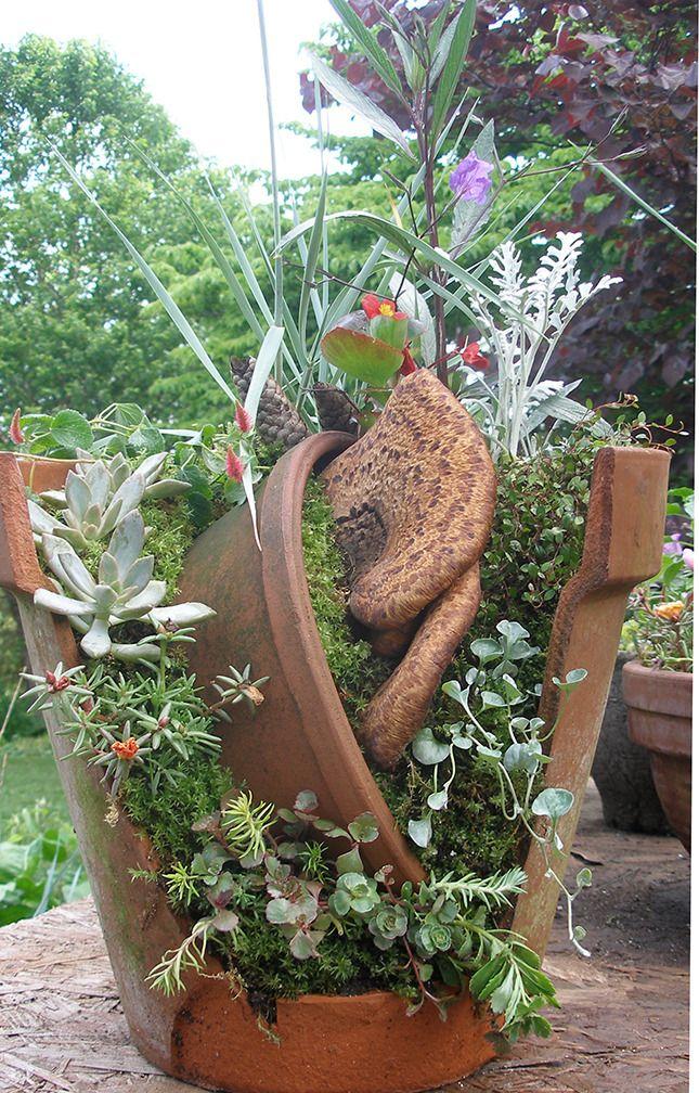 Miniature Gardening forum This Years Community Plant Sale Broken