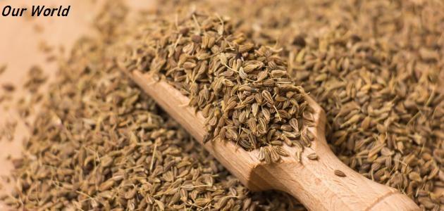 ماهو اليانسون وفوائده المختلفة لصحتك In 2020 How To Dry Basil Herbs Basil