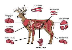 butcher diagram deer meat cuts venison meat cuts pinterest rh pinterest com Butchering a Deer at Home Deer Vitals Diagram