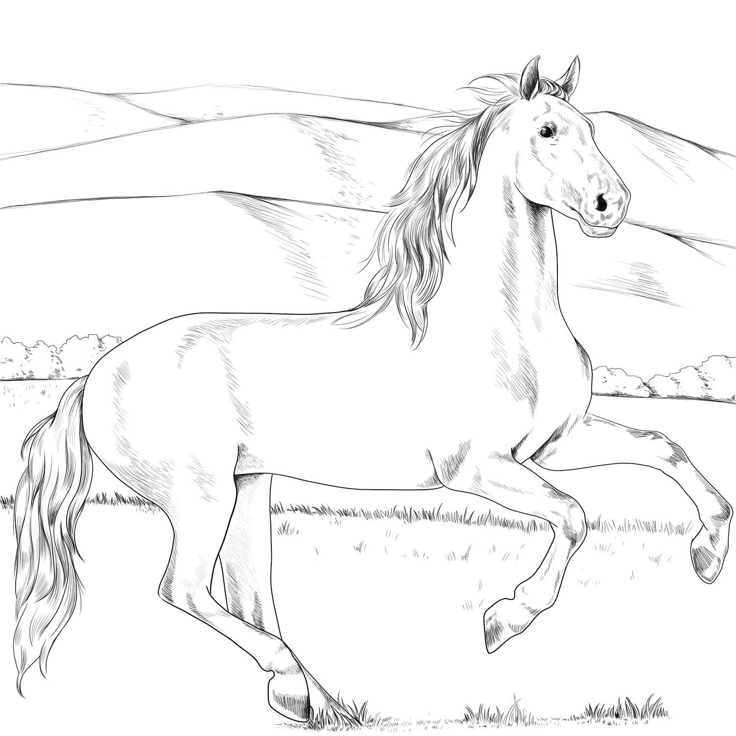 Andalusian Horse Coloring Page Horse Coloring Books Horse Coloring Pages Horse Coloring