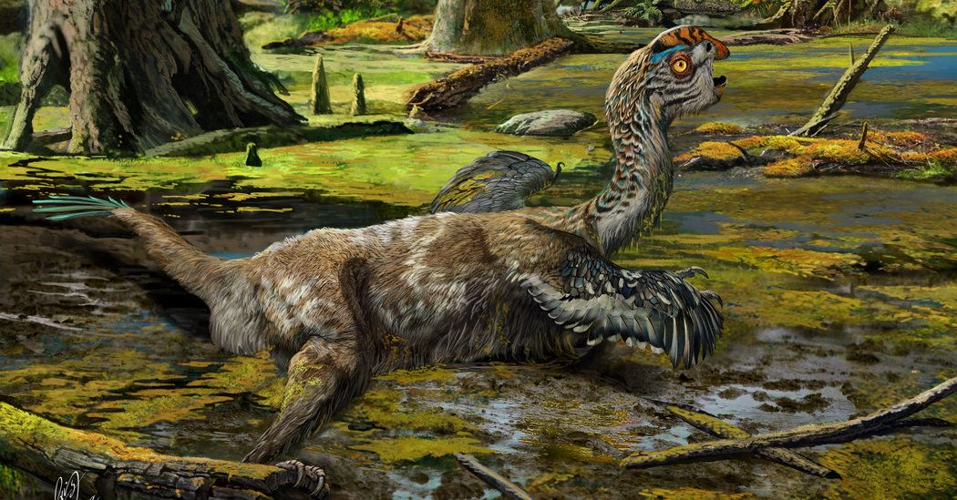 A Dinosaur With A Beak And Feathers Unearthed In China Weird Birds Dinosaur Fossils Dinosaur
