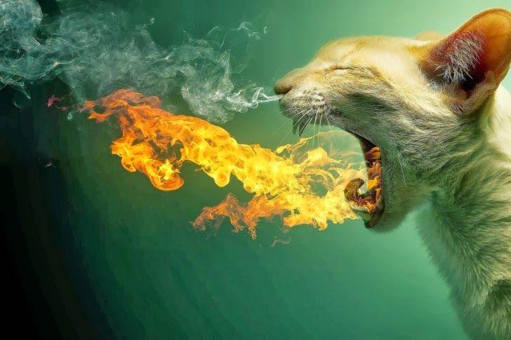 MALETA DE RECORTES: Gatos fotogénicos (2)