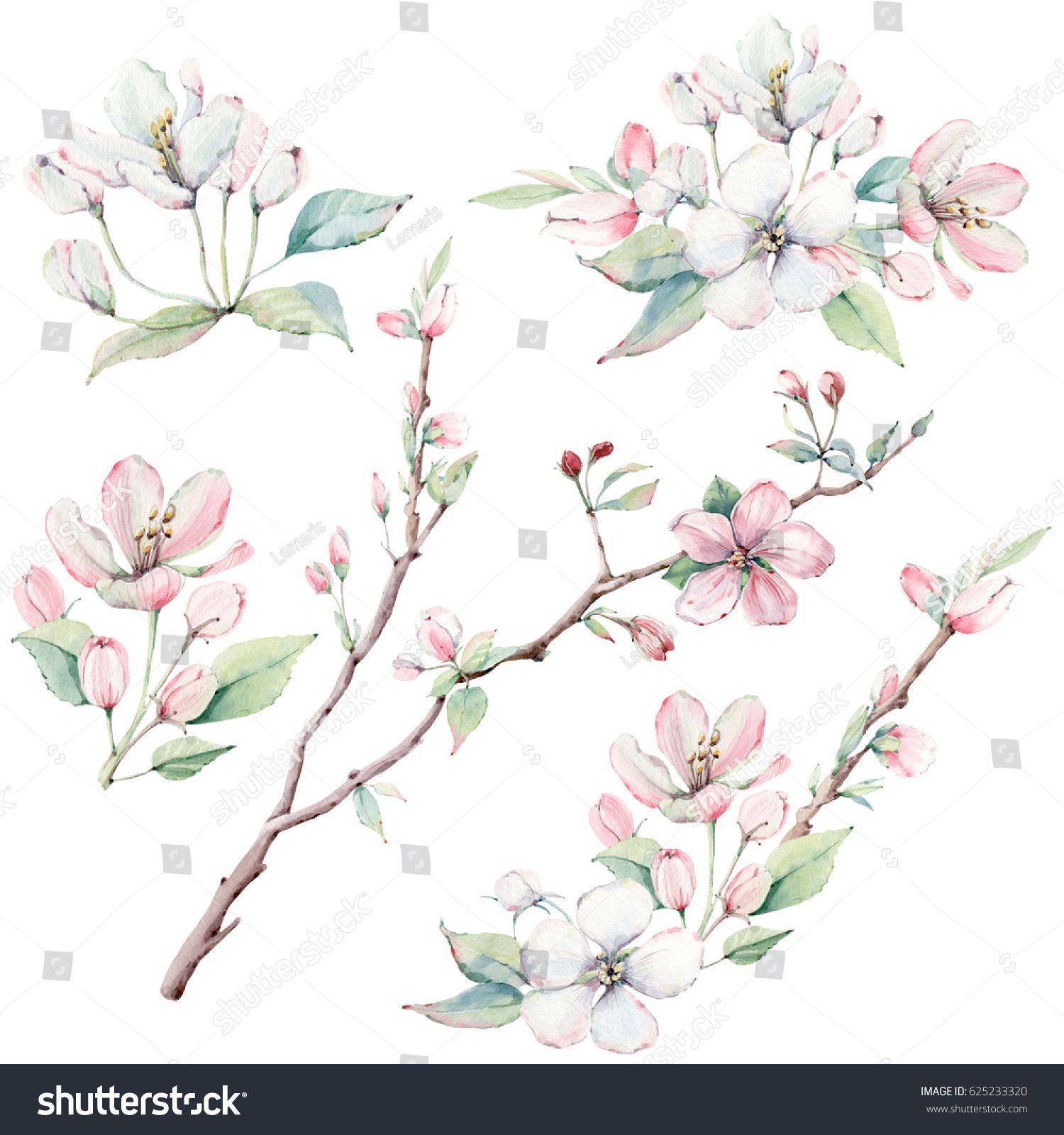 Hand Drawn Apple Tree Branches And Flowers Blooming Tree Its