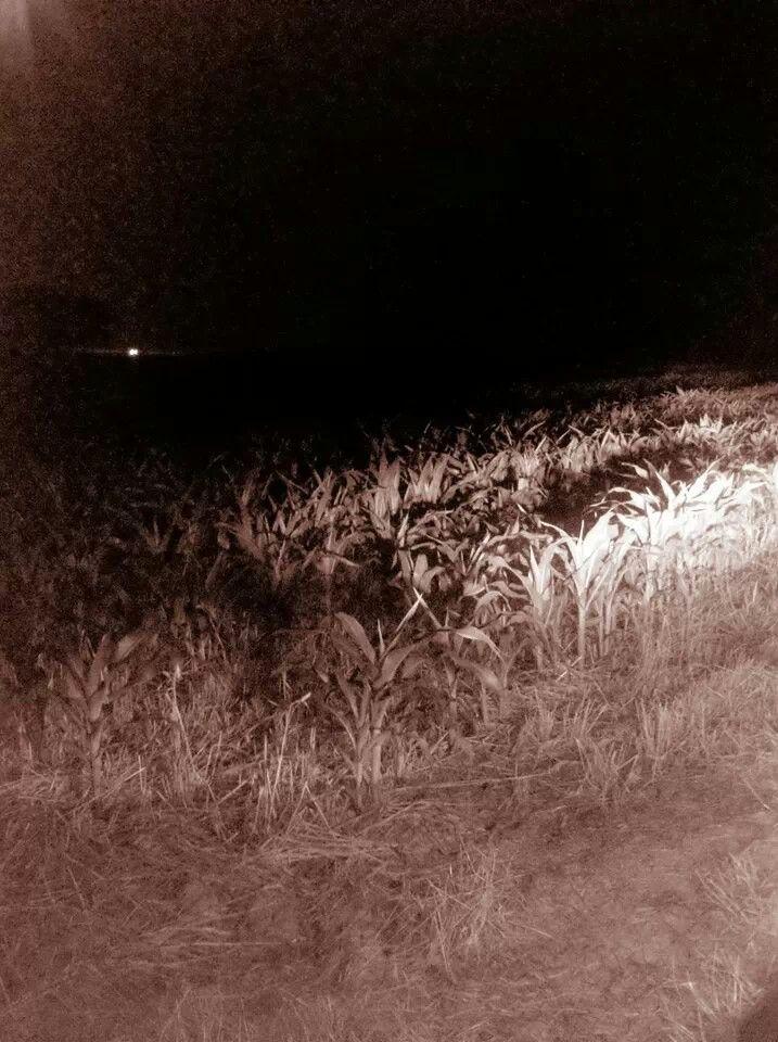 Virginia.  Corn field. Night photo