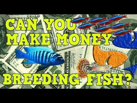 Can You Make Money Breeding Fish? - YouTube