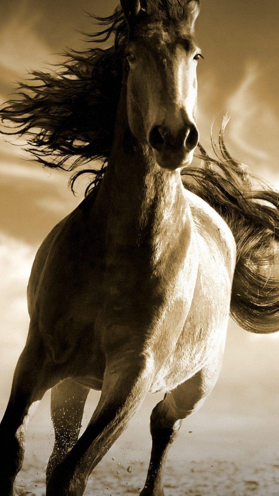 Running Horse Hd Mobile Wallpaper Horses Running Horses Horse Wallpaper