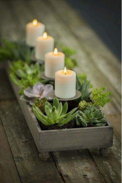 Stunning Diy Succulents For Indoor Decorations 2