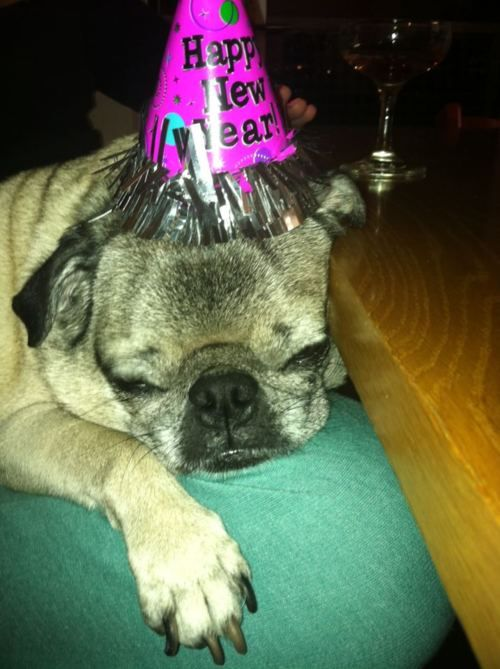 Too Much Partying Pug Dog Party Tired Fun Newyearseve