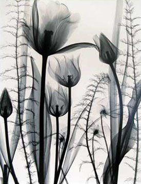 "Judith McMillan:  ""Tulip Garden"""