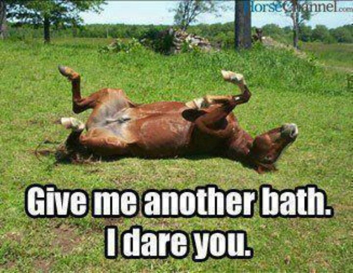 Witty Quotes Pinterest: The 25+ Best Funny Horse Sayings Ideas On Pinterest