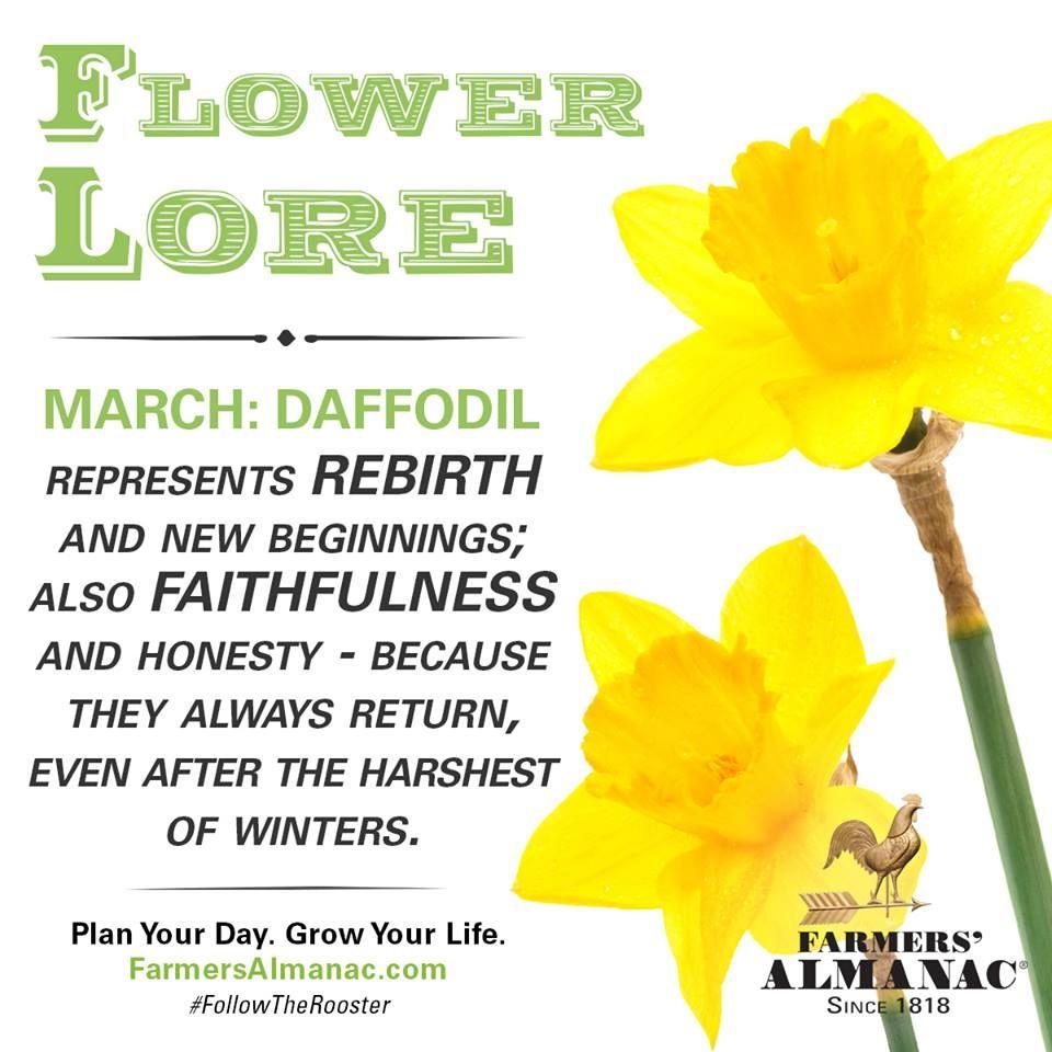 Flower Lore March Daffodil Daffodils New Beginning Tattoo Birth Month Flowers