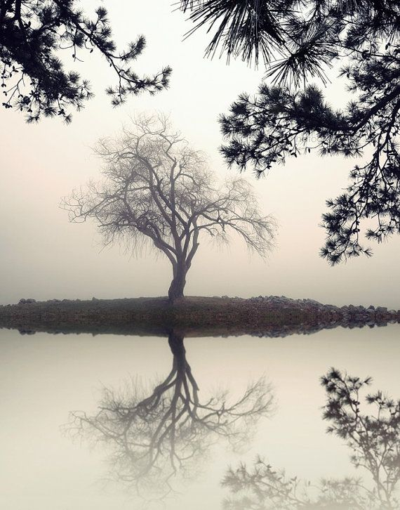Willow Tree Tree Photography Tree Print Lake House Decor Trees In Fog Zen Single Tree Lake Photography Winter Tree Landscape Pictures Black And White Landscape Black And White Pictures