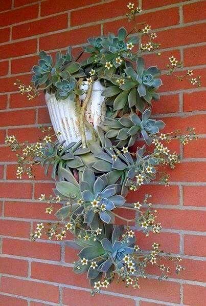 Suculentas colgantes de pared plantas pinterest for Plantas suculentas colgantes