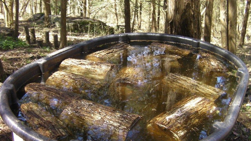 Shiitake mushroom logs soaking at Half Hill Farm Stuffed