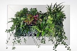 Living Wall Simple Frame With 3 Rows Of Plant Pouches In Which Become Hidden As The Plants Grow