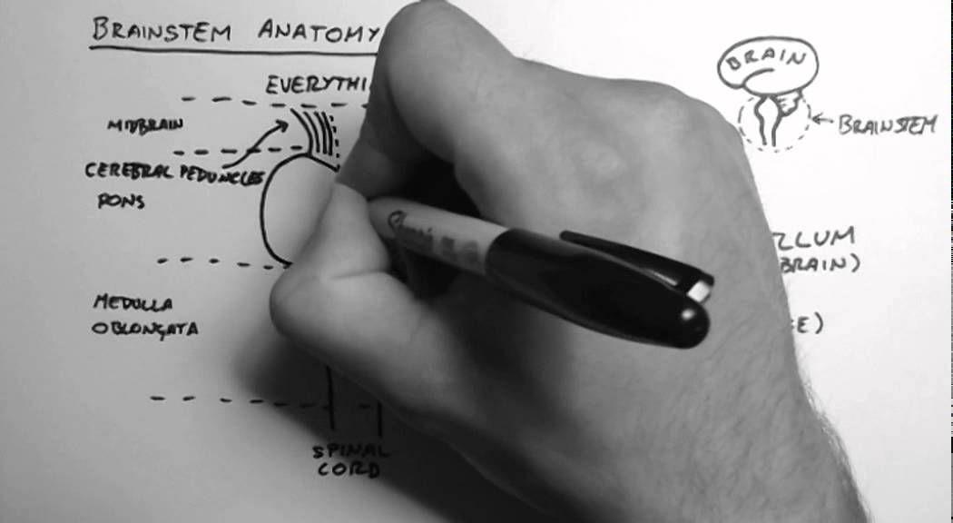 Brainstem Anatomy 1 Midsagittal Section Neuro Tidbits For