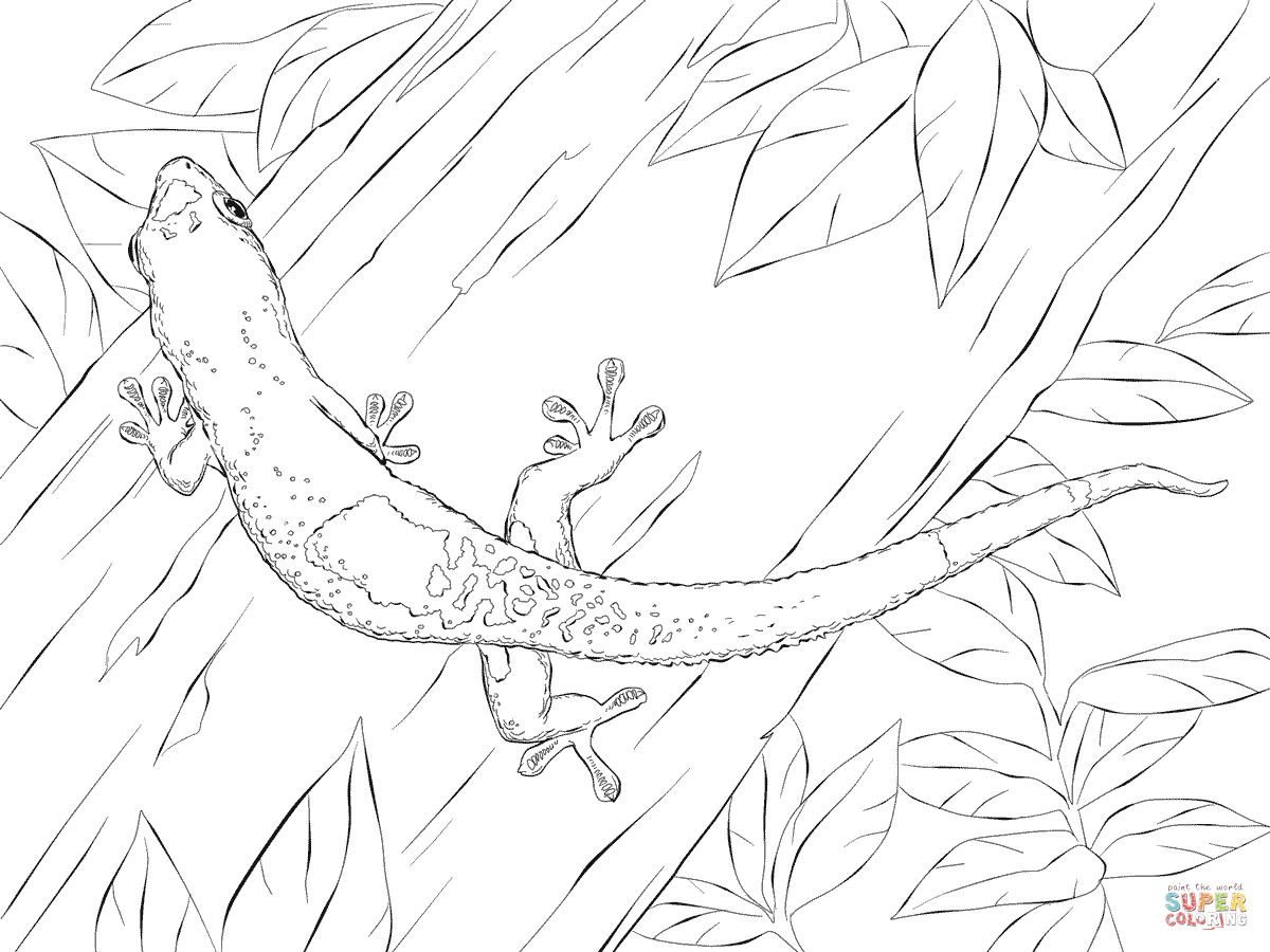 Gecko Coloring Page Madagascar Day Gecko Coloring Pages