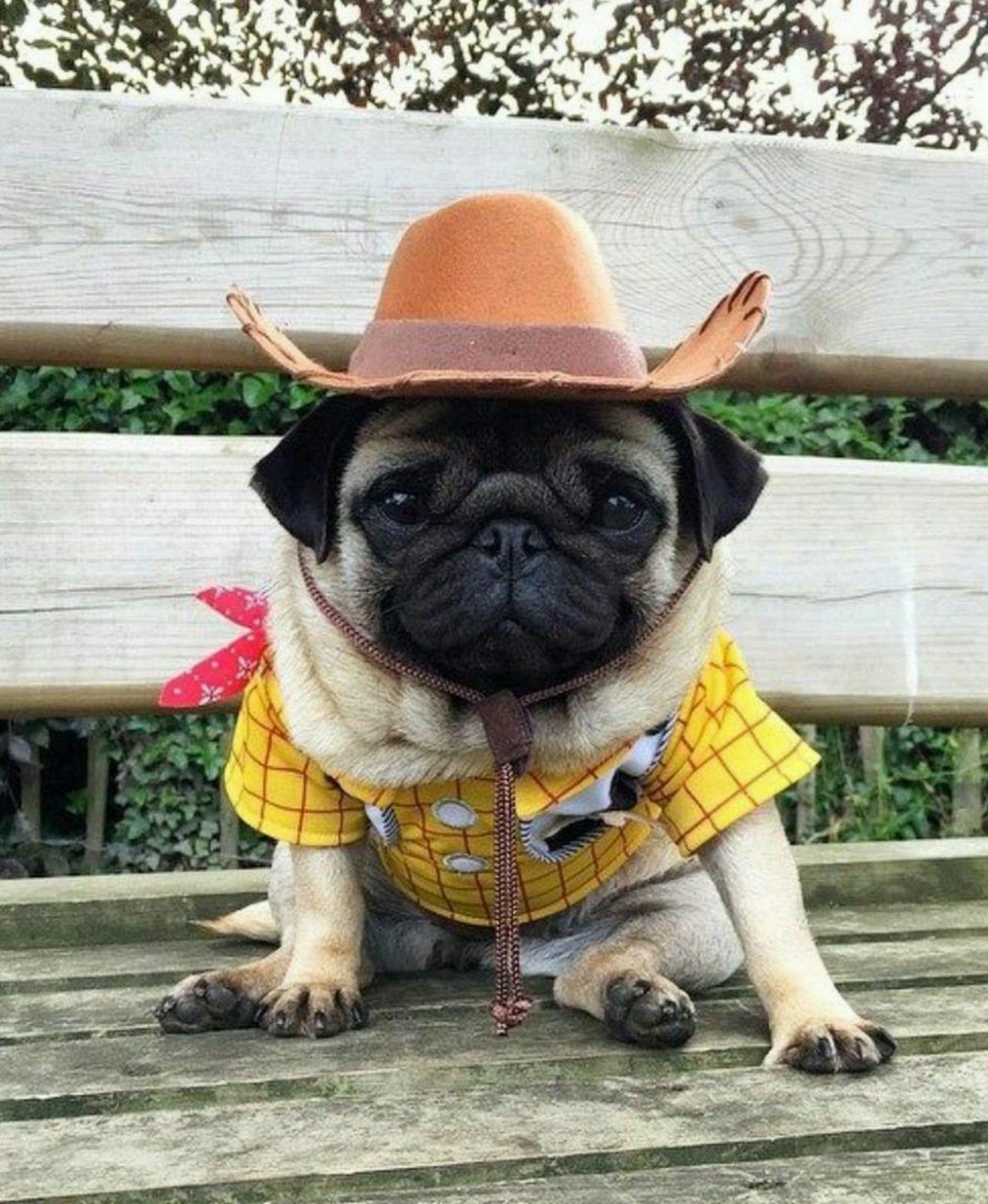 Cowboy Pug Cute Pugs Pugs Pugs Funny