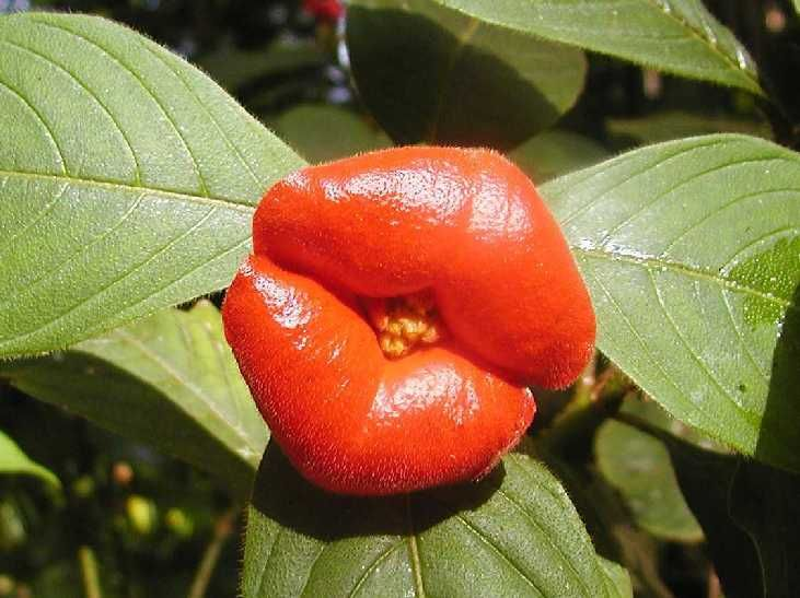 Strange Plants And Flowers Odd Plant Frutas Del Mundo Plants