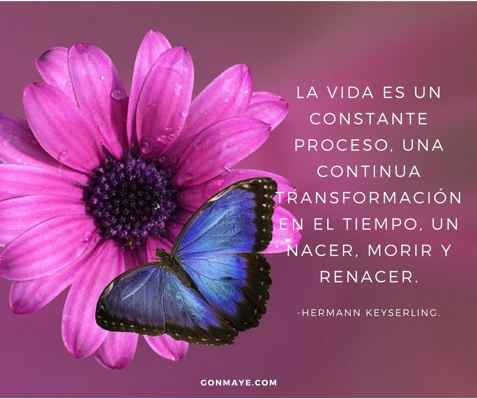 Frases Citas Vivir Quotes Life Butterfly
