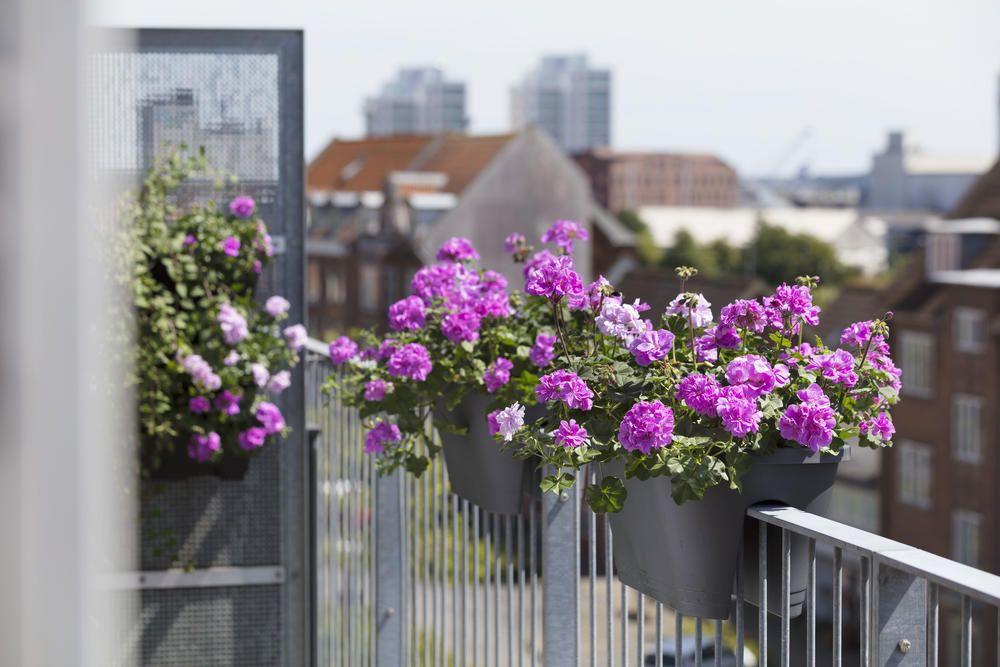 Balkonpflanzen Fur Die Pralle Sonne Balkon Pflanzen Balkon