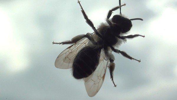 5 astuces efficaces pour lutter contre les mouches astuce contre les insecte pinterest. Black Bedroom Furniture Sets. Home Design Ideas