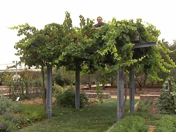 Garden Design Styles   Garden vines, Grape trellis, Vine ...
