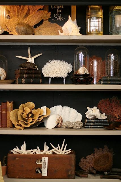 Dark backdrop. shelf styling. Nice to diplay a light coloured collection as in this display of seashells and coral. Would be great display for a coastal home