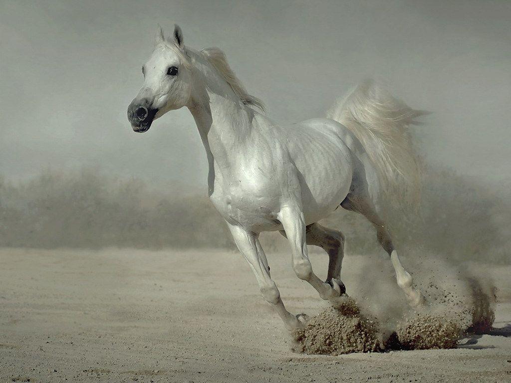 Good Wallpaper Horse Valentines Day - 065405610cc641a693b6958e1b19d8ba  Graphic_93628.jpg