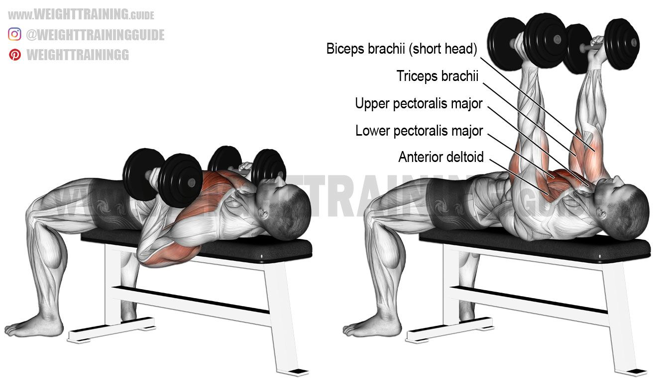 Hammer grip dumbbell bench press. A compound exercise. Target ...
