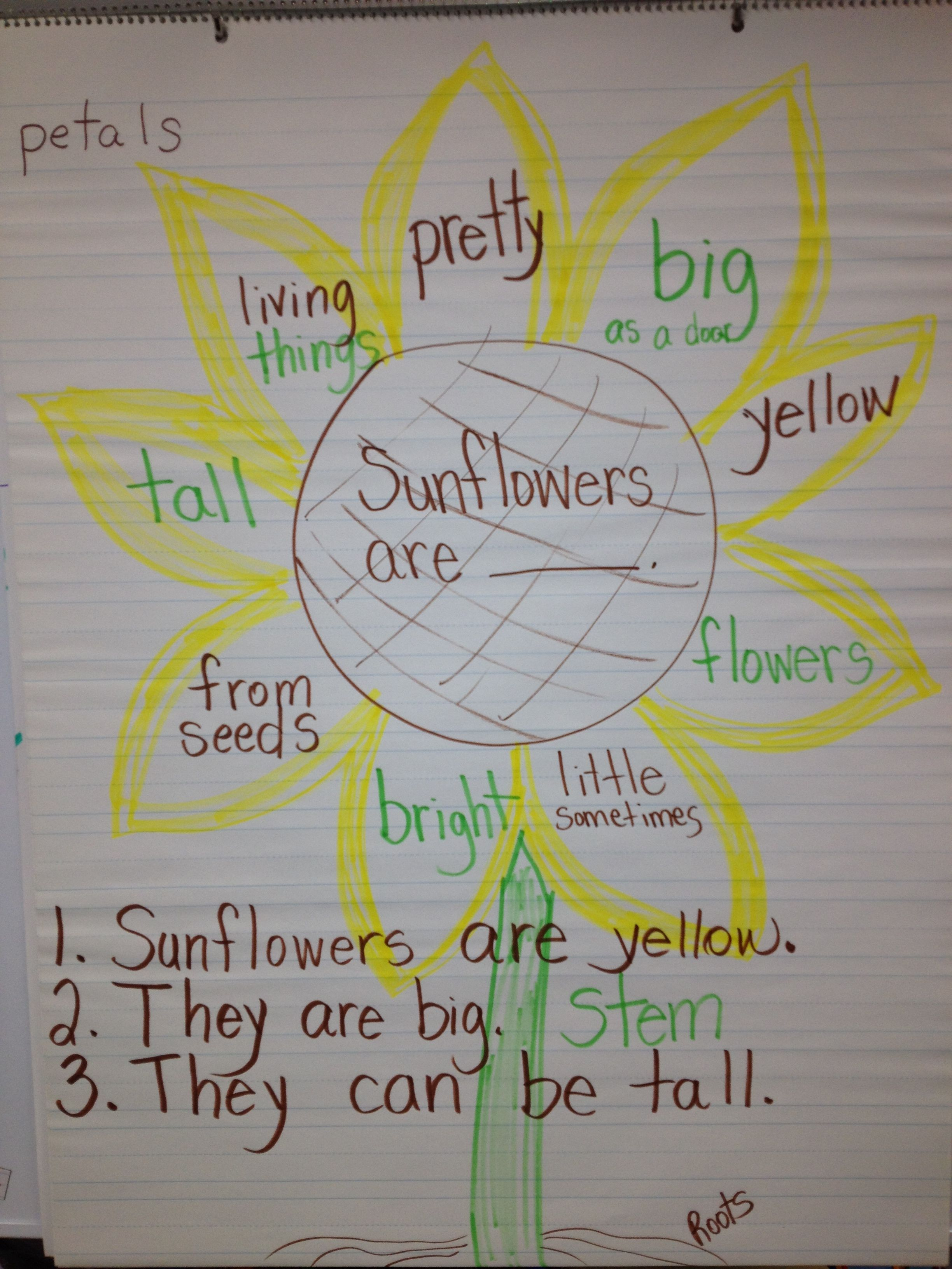 Spring Has Sprung In Kindergarten