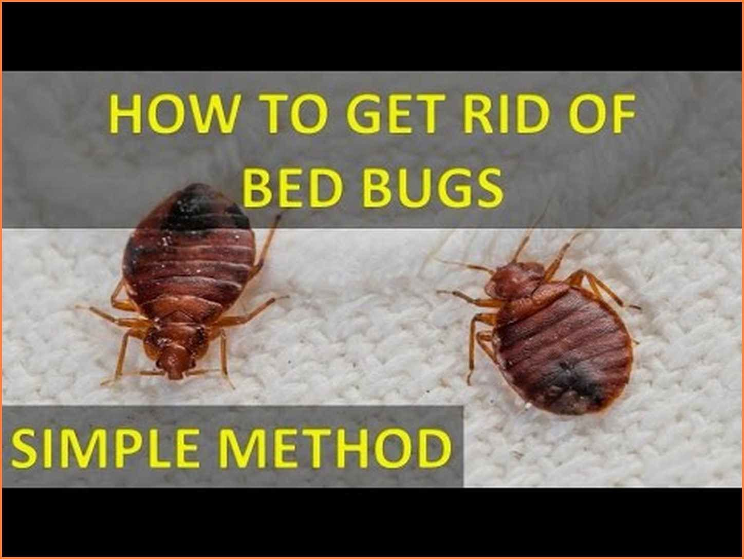 How To Eliminate Bed Bugs Completely With Images Rid Of Bed
