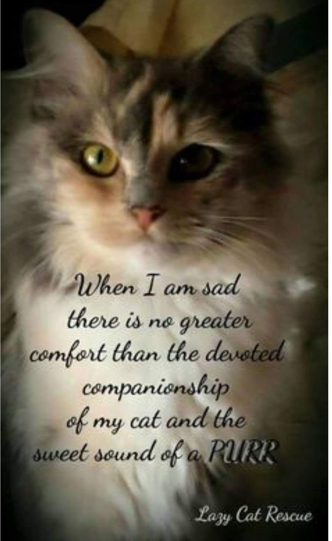 Pin By Susan H On Amazing Purrs Cat Love Quotes Cat Quotes Cat Love