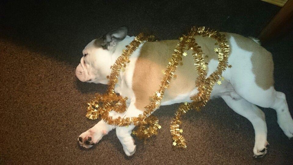 Murphys 1.christmas