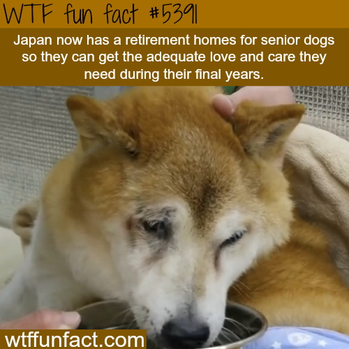 Retirement Colonies Senior Citizens Find A Home Away From: Japan Now Has Retirement Homes For Dogs